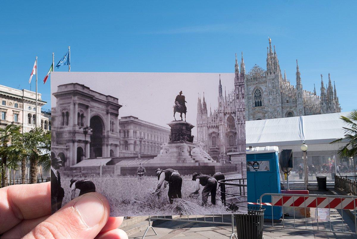 Coltivazione del grano in Piazza Duomo, Milano 1943