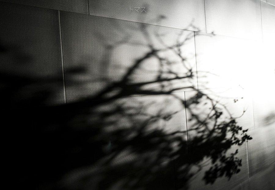 Memory of Nature