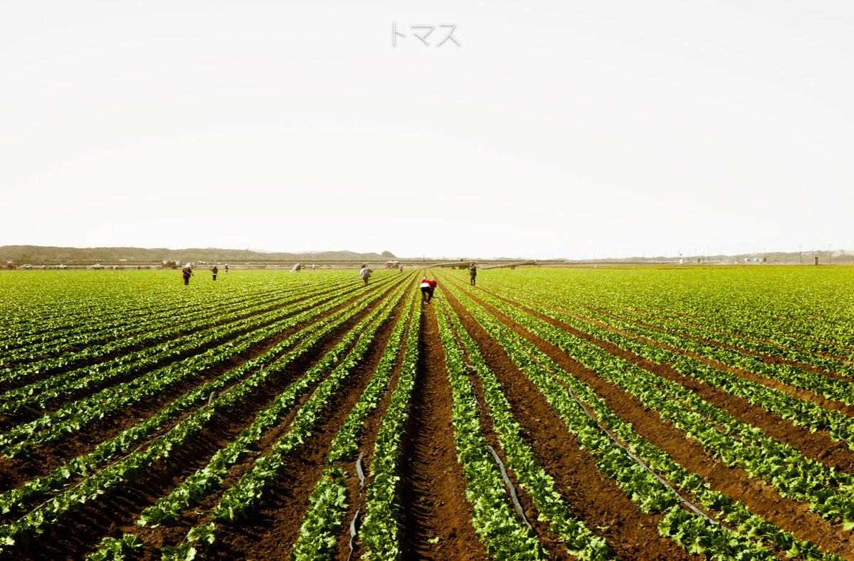 Mexican farmer in a californian field