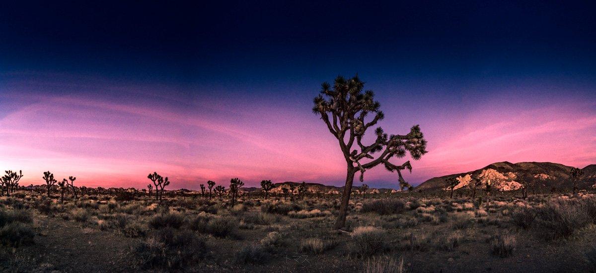 tramonto joshua tree park